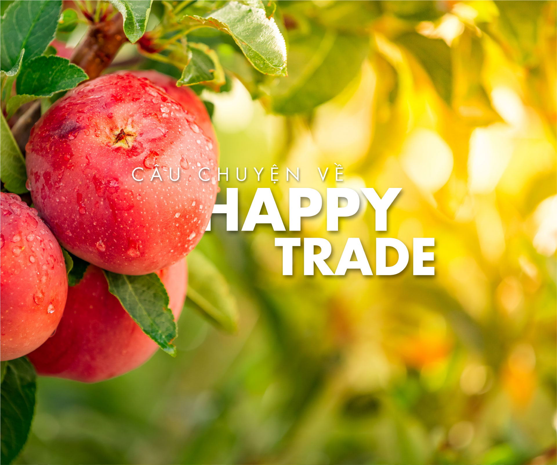 about-happy-trade
