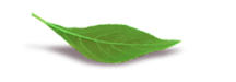 kuv_featured_leaf