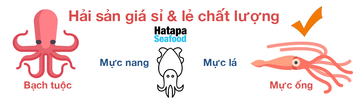 Mực nang panda developer team